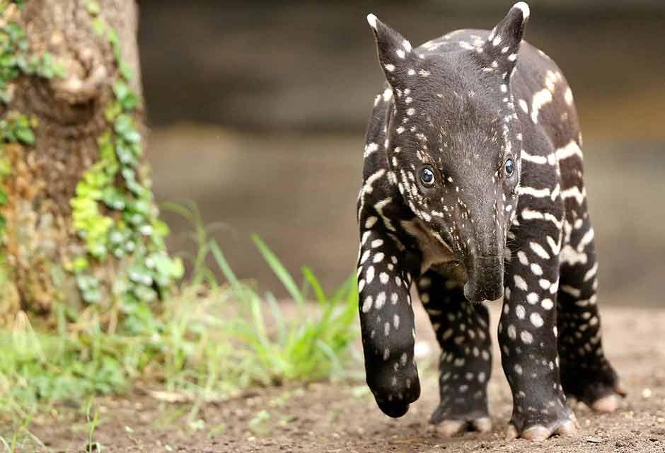 Djur i Pantanal. Brasilien