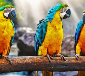 Resan till Pantanal som räddade miljön