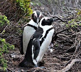 Kapstaden och Kruger Nationalpark