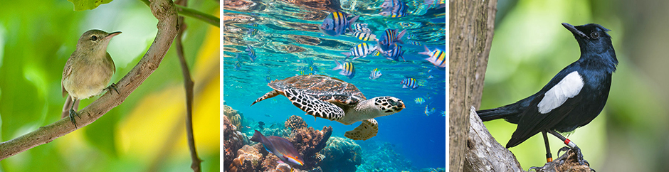 Seychellsångare, karettsköldpadda och Seychellshama
