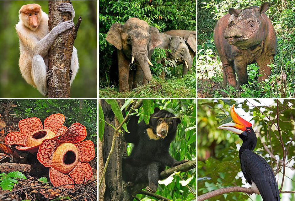 Borneo natur resa