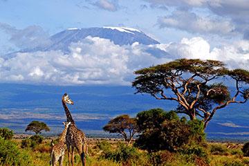 Dag 2: Safari i Amboseli