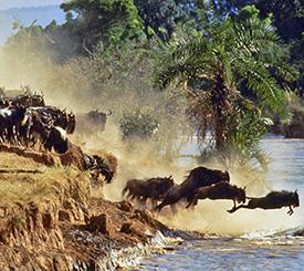 Kenya | den stora migrationen