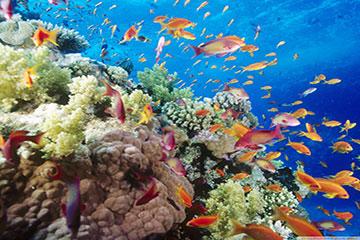 Sharm el-Sheikh - Kloster och korallrev