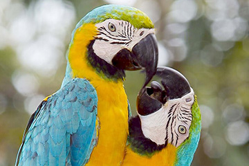 Regnskog i Gamboa Nationalpark