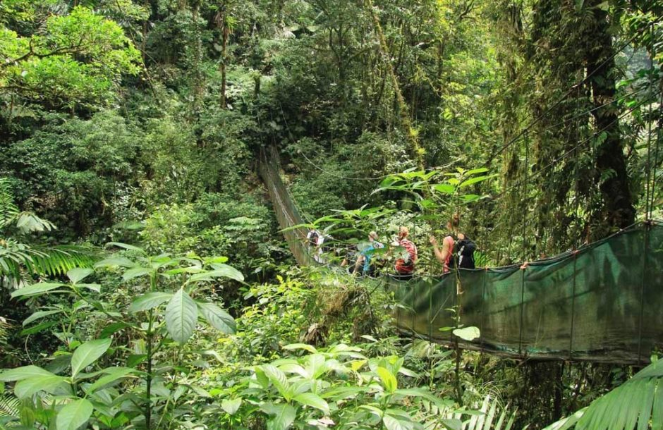Monteverdes regnskog