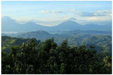 Bwindi - Parc National des Volcans